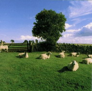 "The KLF ""Chill Out"" (1990)/  ambient.."