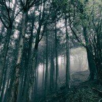 Akira Kosemura - In the Dark Woods (2017) / Ambient, Modern Classical